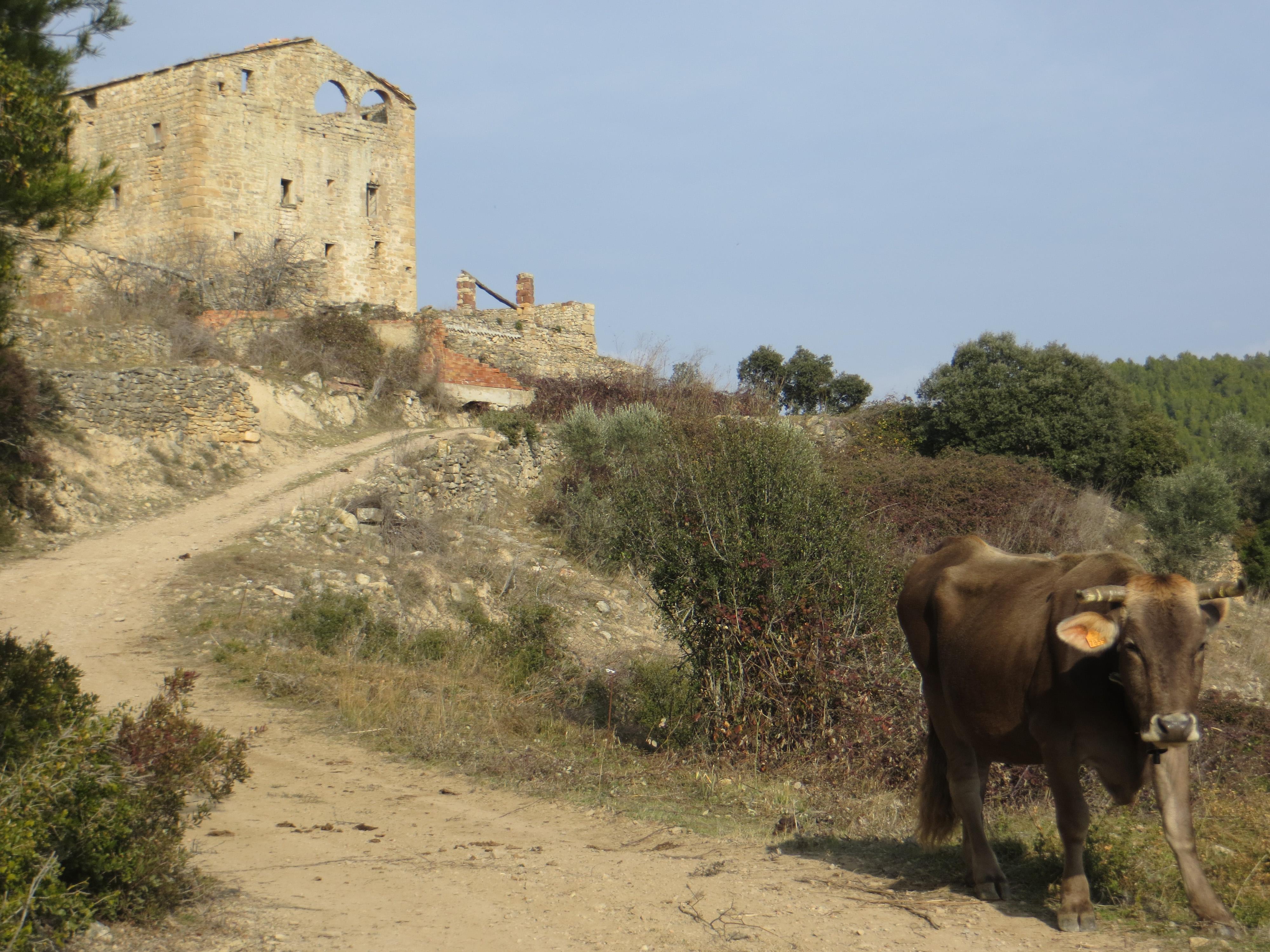 <p><strong>Unitat de Paisatge: </strong>Rubió – Castelltallat – Pinós<strong><br /> </strong></p> <p><strong>Municipi: </strong>Sant Mateu de Bages<strong><br /> </strong></p> <p><strong>Autor: </strong>Diputació de Barcelona. Of. Tècnica de Planificació i Anàlisi Territorial</p> <p><strong>Crèdit:</strong> Arxiu d'imatges de l'Observatori del Paisatge de Catalunya</p> <p><strong>Reproducció:</strong> CC BY-NC-ND 4.0</p>  <a href='http://arxiu.catpaisatge.net/wp-content/uploads/2019/04/Sant-Mateu-de-Bages-Bages-Rubio-Castelltallat-Pinos.jpg'' class='download-button' download>Descarrega</a> <a href='http://arxiu.catpaisatge.net/cercador/?details.vm?q=id:0000006509' target='blank' class='fitxa-button' >Fitxa</a>
