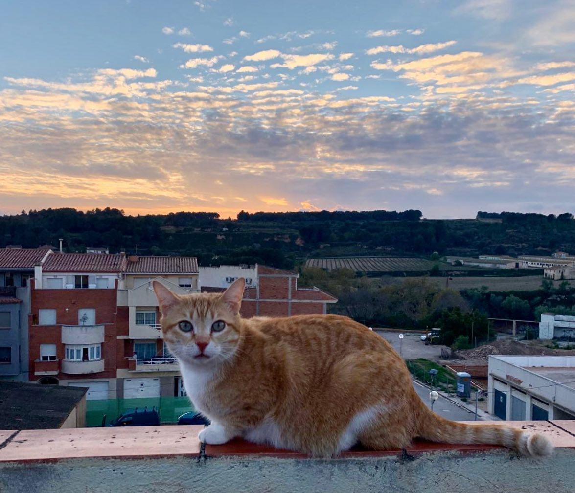 <p><strong>Unitat de Paisatge: </strong>Camps de Santes Creus<strong><br /> </strong></p> <p><strong>Autor: </strong>Bet Carbonell</p> <p><strong>Crèdit:</strong> Arxiu d'imatges de l'Observatori del Paisatge de Catalunya (<strong>@</strong>Llepol_cat)</p> <p><strong>Reproducció:</strong> CC BY-NC-SA</p>  <a href='http://arxiu.catpaisatge.net/wp-content/uploads/2020/05/llepol_insta.jpg'' class='download-button' download>Descarrega</a> <a href='http://arxiu.catpaisatge.net/cercador/?details.vm?q=id:0000006791' target='blank' class='fitxa-button' >Fitxa</a>
